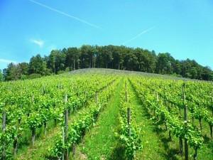 Bioweinbau Cultiva